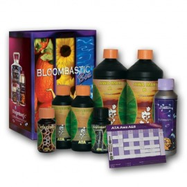Bloombastic Box Awa